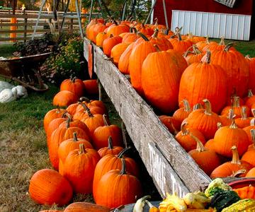 Omaha Area Pumpkin Patches, Corn - Family Fun in Omaha