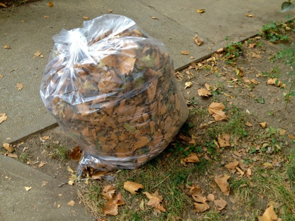 Winter Composting Bag of Leaves
